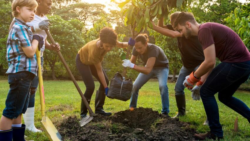 Comment bien planter ses arbustes ?