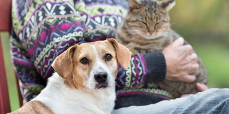 Quelle alimentation donner à son chat ou chien senior ?