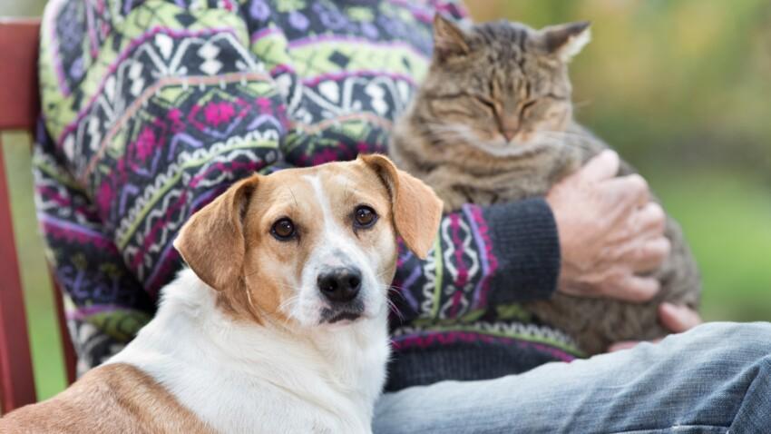 Quelle alimentation donner à son chat ou chien senior ?