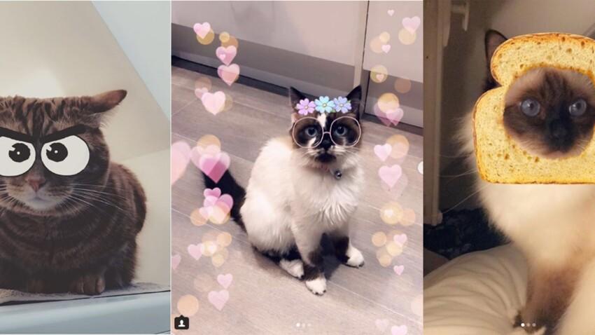 Snapchat lance des filtres pour votre chat