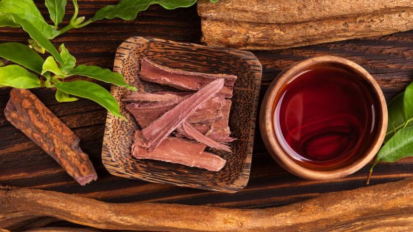 L'ayahuasca : quelle est cette plante hallucinogène qui intrigue les scientifiques ?
