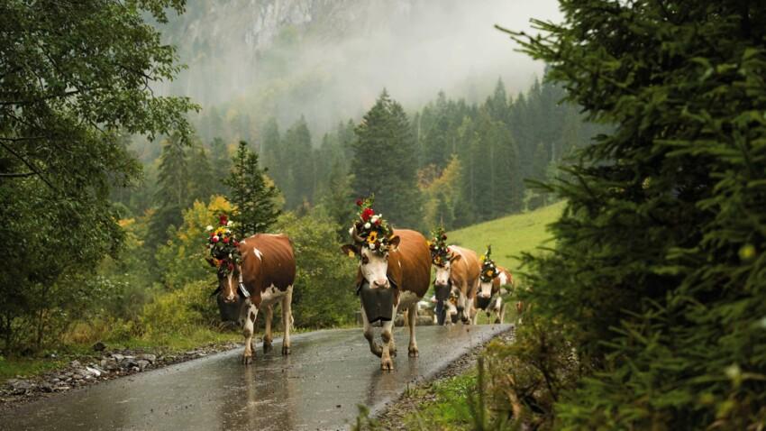 Un fromage d'exception au goût de la Suisse