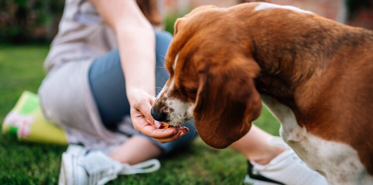 Quelle friandise donner à son animal