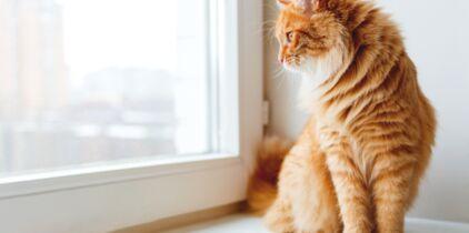 Mature et adolescent chatte