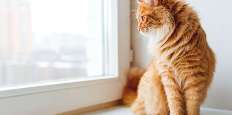 Les 10 erreurs à ne pas commettre avec son chat