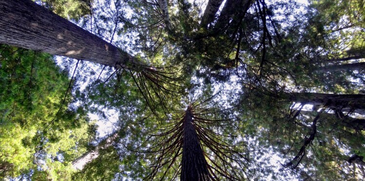 5 forêts absolument incroyables en Europe et ailleurs