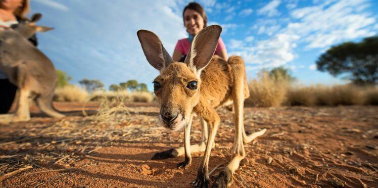 10 activités insolites à faire en Australie
