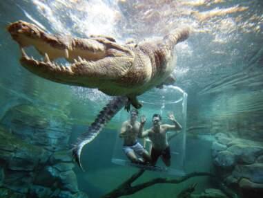 Australie : 10 activités insolites à faire pendant son séjour