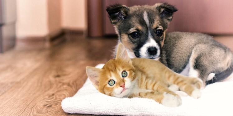 Adopter un chiot ou un chaton pour la journ e la - Couper les griffes d un chiot ...