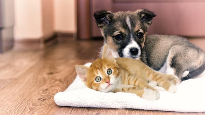 Adopter un chiot ou un chaton pour la journée ? La mauvaise idée d'un site américain