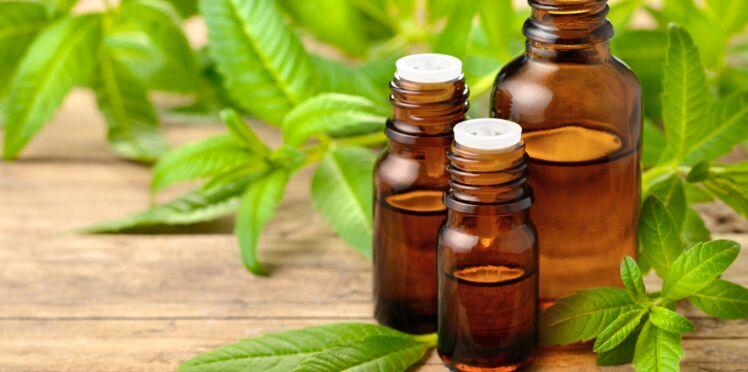Phytothérapie : les vertus santé de la verveine odorante