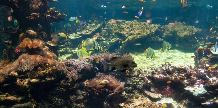 Les 5 aquariums les plus originaux du monde