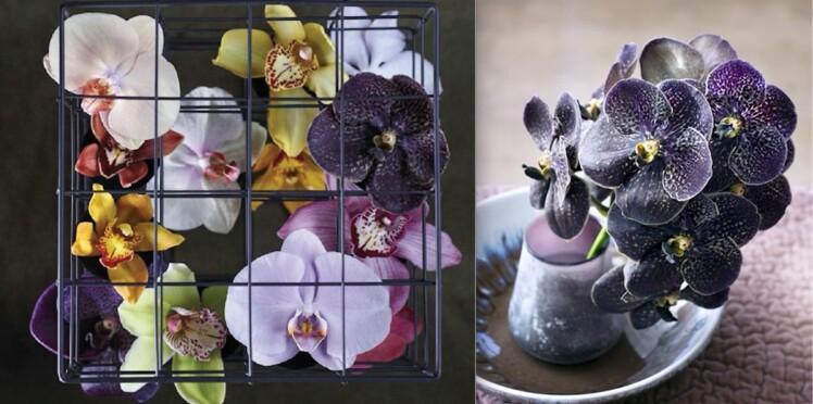Entretien de l'orchidée, comment s'y prendre