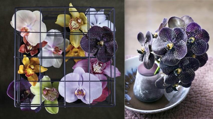 9 conseils pour prendre (vraiment) soin des orchidées
