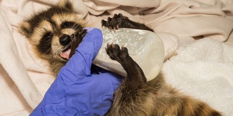 """Témoignage : """"Je soigne les animaux sauvages blessés"""""""