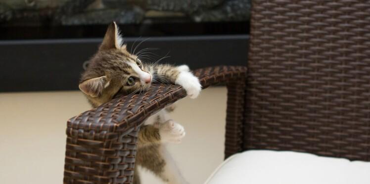Adoption d'un chaton : les 16 endroits à surveiller dans la maison