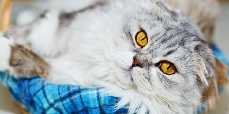 5 preuves scientifiques que le chat rend la vie meilleure