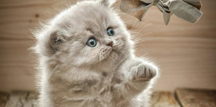 Les 8 clés d'un chaton en pleine santé