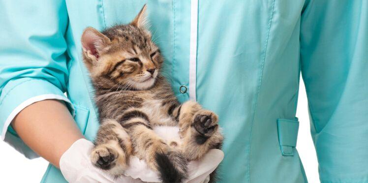 Acupuncture, homéopathie, ostéopathie... 6 techniques pour soigner son chat au naturel