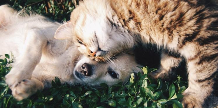 Les différences entre un propriétaire de chat ou de chien