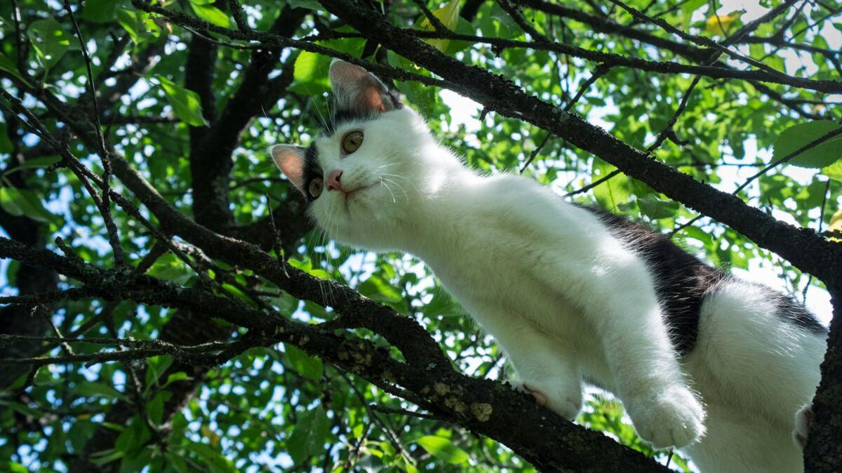Mon Chat Dort Sur Mes Pieds 10 choses à savoir sur le chat adolescent : femme actuelle
