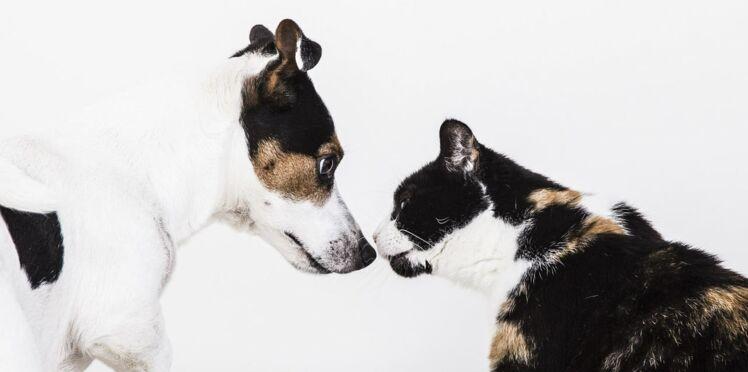 Pourquoi les Français préfèrent-ils les chats aux chiens ?