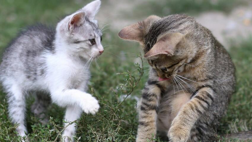Bagarres, marquages, fugues… Pourquoi et comment réagir avec votre jeune chat ?