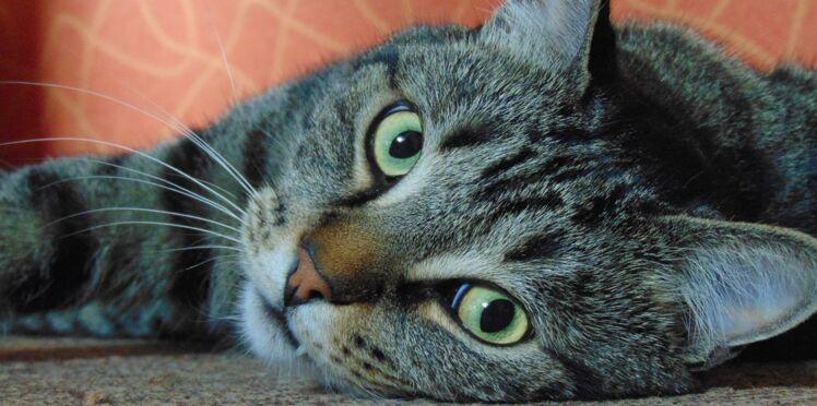 Contraception de la chatte : les 3 solutions