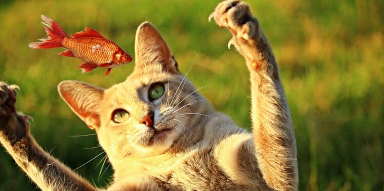 Nourriture pour chat : faut-il passer au cru ?