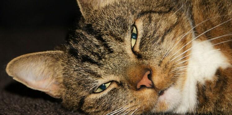 Chat malade : et si c'était son alimentation ?