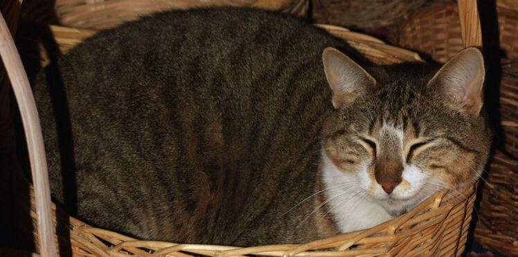 10 choses à savoir sur le vieux chat