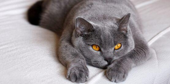 vieux chat maigre comment le faire grossir
