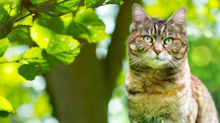 Comment protéger les oiseaux (et autres) de son chat ?