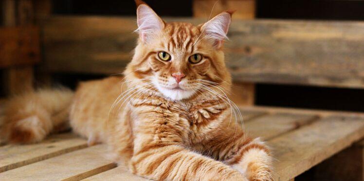 10 vrai/faux sur le bonheur des chats