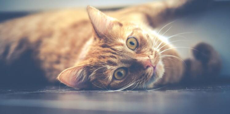 Trois leçons de vie à apprendre de notre chat