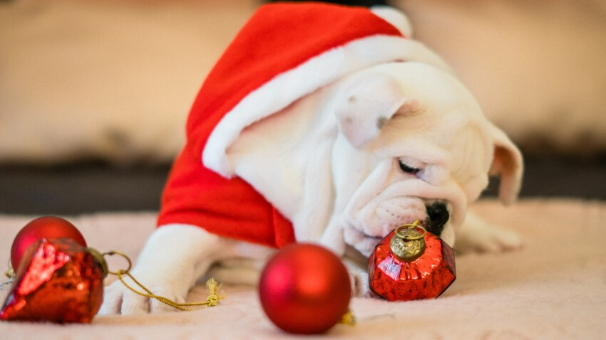 Nos idées de cadeaux de Noël pour chiens et chats