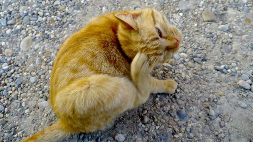 Comment bien soigner son chat