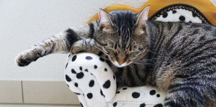 Les meilleures adresses pour faire garder son chat, partout en France