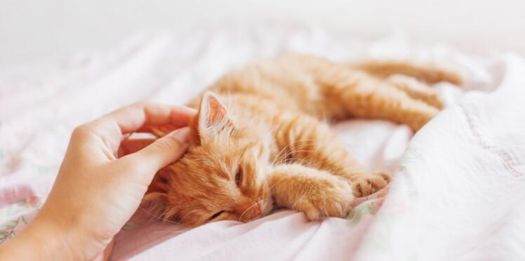 7 rituels à piquer à son chat pour être heureux