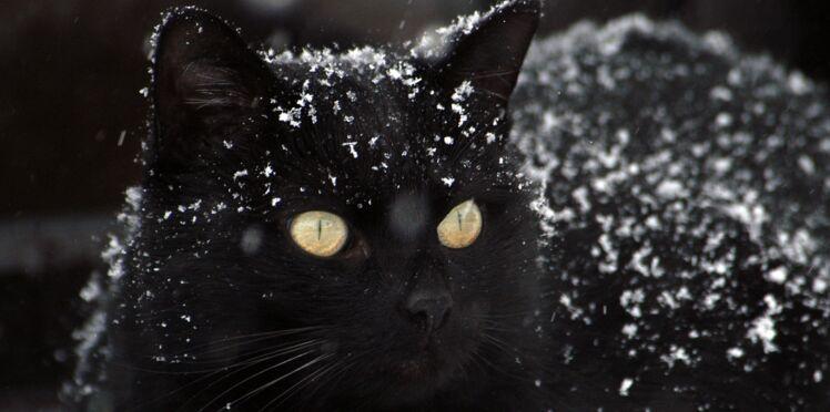 7 conseils pour protéger votre chat en hiver