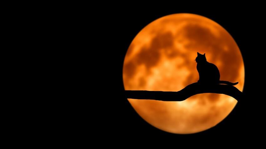 Horoscope 2019 : les prévisions pour votre chat selon son signe astrologique