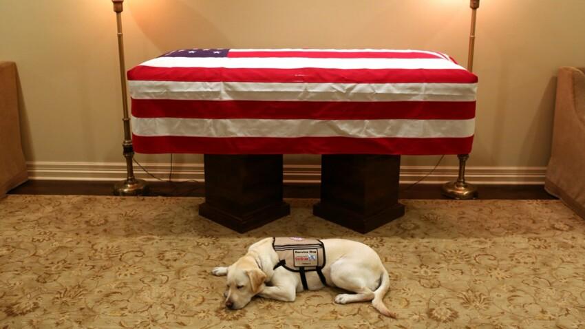 Sully, le Chien de George Bush, accompagne le cercueil de son maître