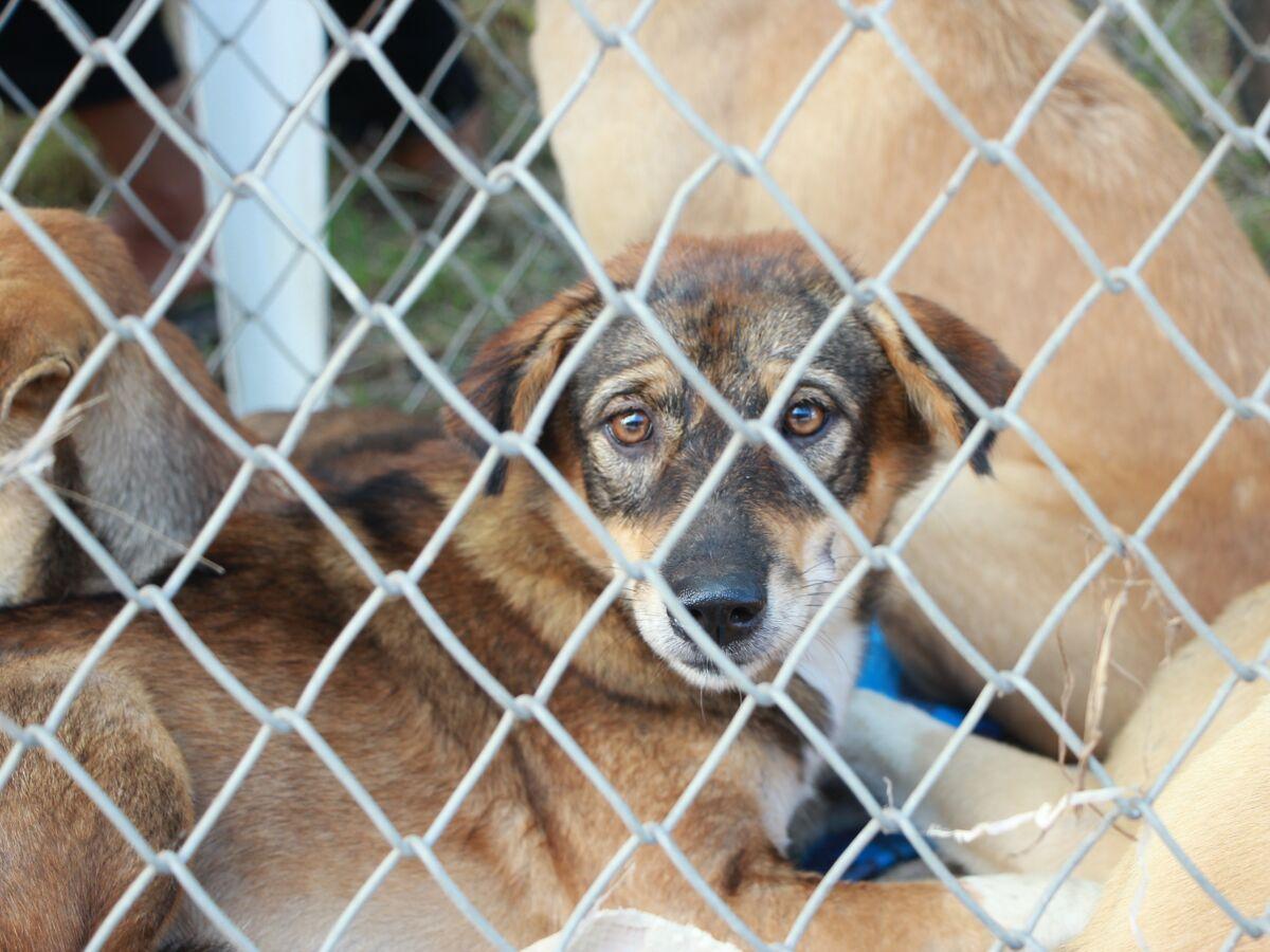 Bruit Griffe Chien Parquet une spa alerte sur les pires motifs d'abandon des animaux