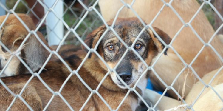 Une SPA alerte sur les pires motifs d'abandon des animaux