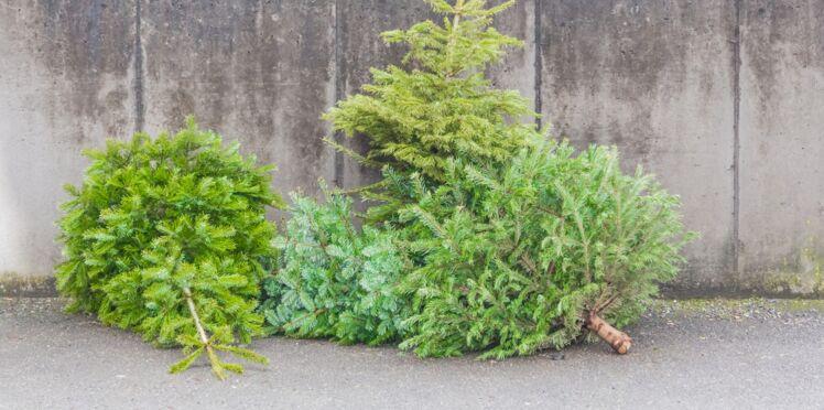 Comment bien se débarrasser de son sapin après Noël