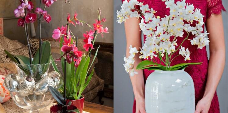 Floraison de l'orchidée, comment la renouveler