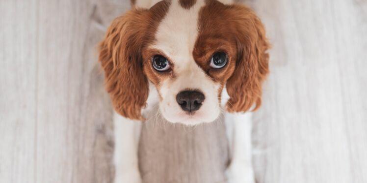 Détresse respiratoire ou crise cardiaque : comment aider son chien ?