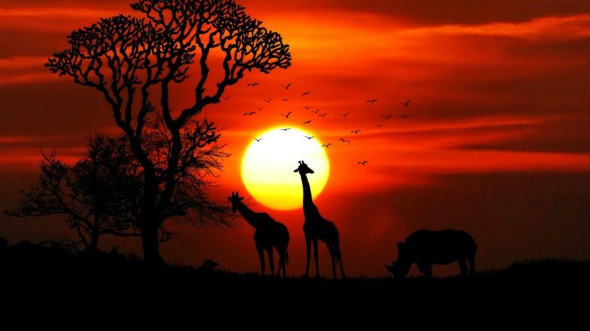 Horoscope africain : découvrez votre signe et son portrait