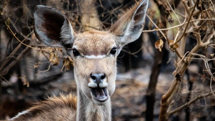 Un braconnier américain condamné à regarder Bambi une fois par mois