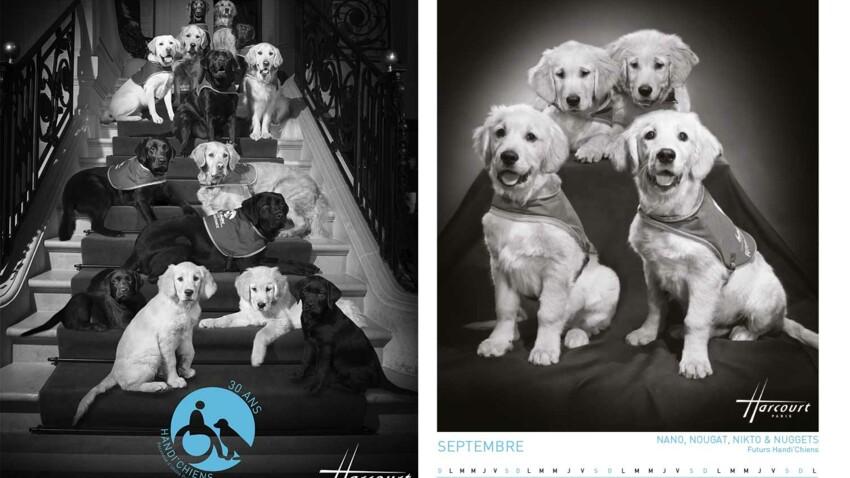 Calendrier 2019 : des chiens d'assistance par Harcourt